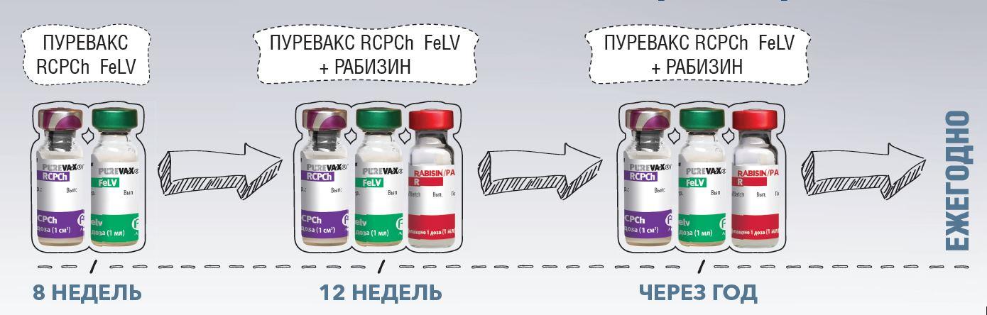Схема вакцинации кошек от вирусного лейкоза